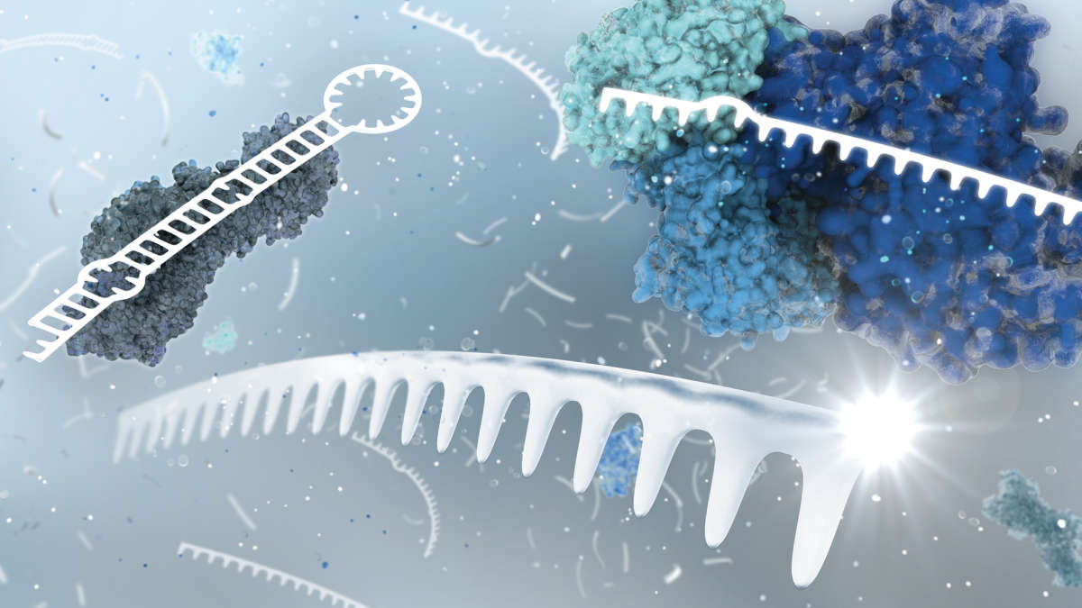 LNA (Locked Nucleic Acids) Knowledge Center