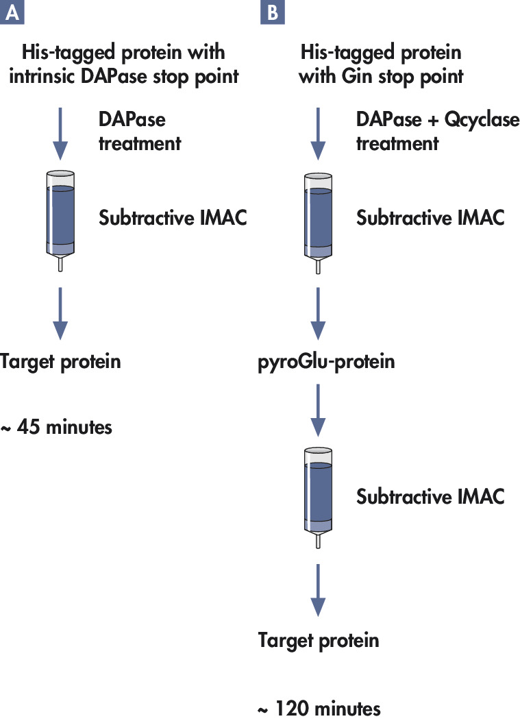 Purification of detagged proteins.