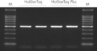 Highly sensitive single-cell PCR.