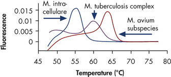 Reliable differentiation between M. tuberculosis complex, M. avium subspecies, and M. intracellulare.